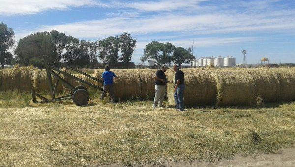 Rollos que fueron llegando a La Pampa para ser distribuidos