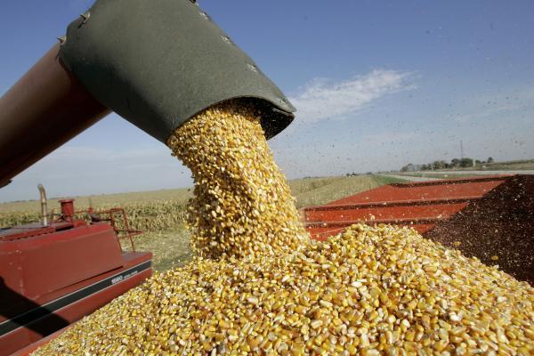 Baja la participación del Estado en la renta agrícola nacional al 64 por ciento