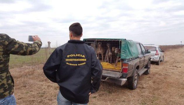 Parte de los perros galgos utilizados y rescatados por la policia