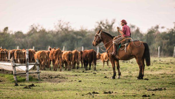 Hoy 8 de octubre es el dia del Trabajador Rural