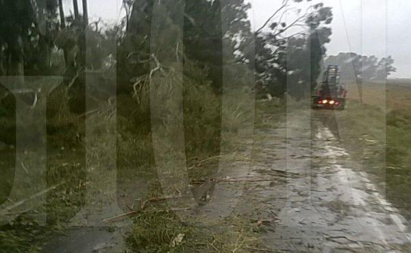 Plantas que obstruyen ruta 65 en cercanias del Monasterio