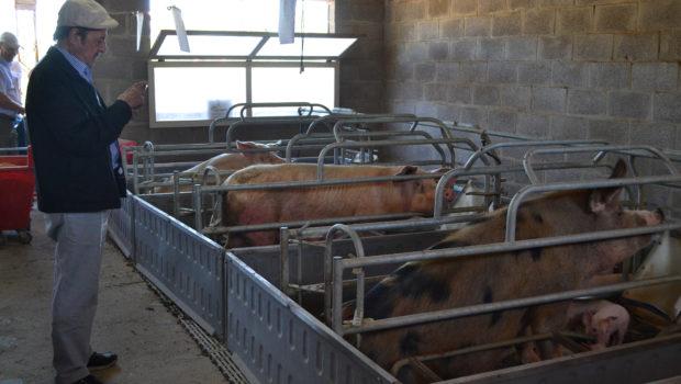 Barbaro en el galpon de cria en EAS Del Valle