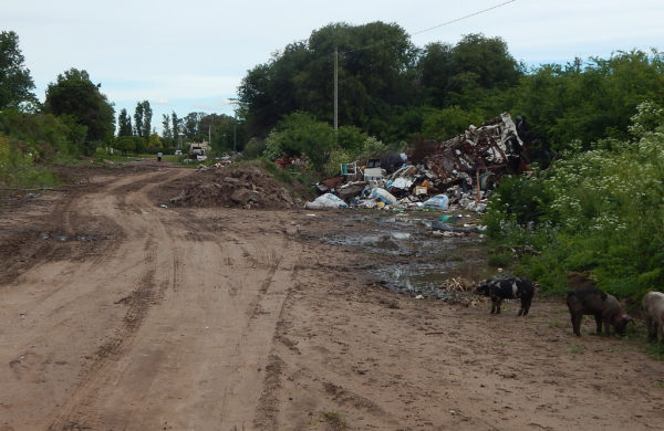 Calle paralela a Av Juan D Peron y donde se observa la presencia de estos animales