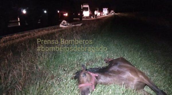 Uno de los animales con el que impacto la pickup en ruta 5 km 219