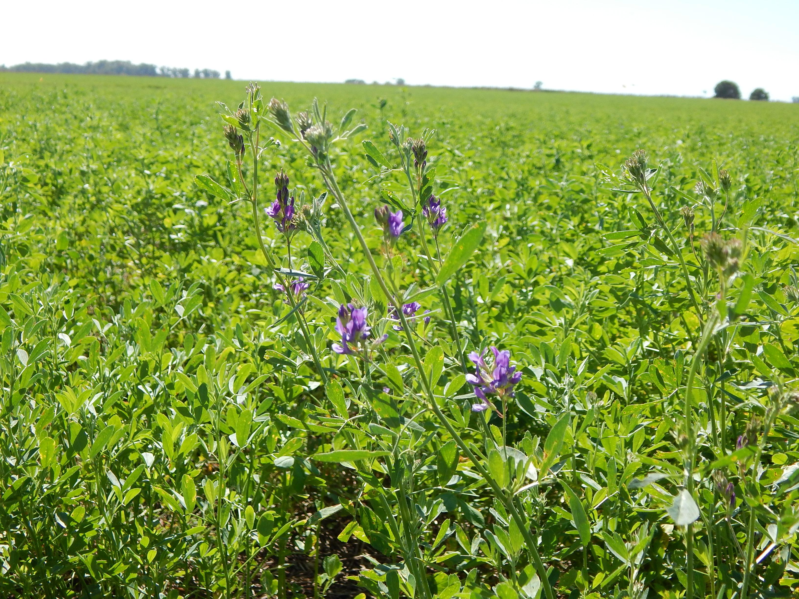 Se inicio la pre campaña de semillas forrajeras en el YPF Directo de Guazzaroni Greco