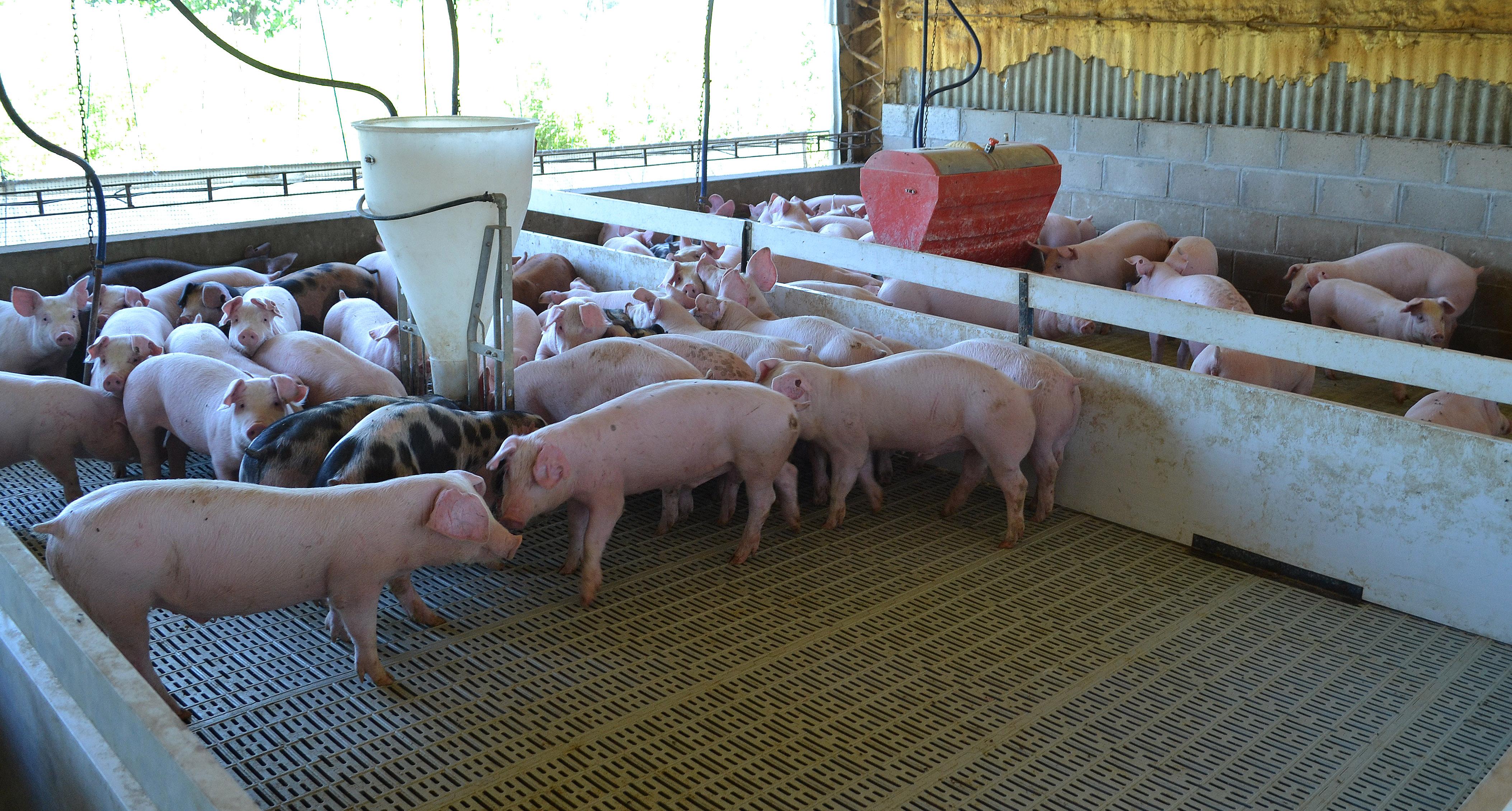 Prosigue la asistencia financiera a pequeños productores bovinos y porcinos en Buenos Aires