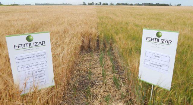 Ensayo de trigo en un establecimiento del partido de 25 de mayo campaña 16-17