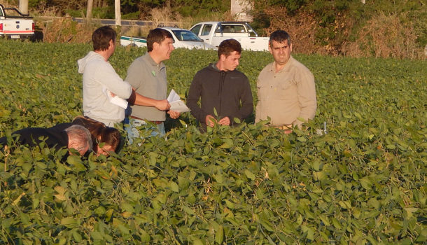 Ing Juan Marsigliani junto a un grupo de agronomos y productores durante la recorrida al ensayo