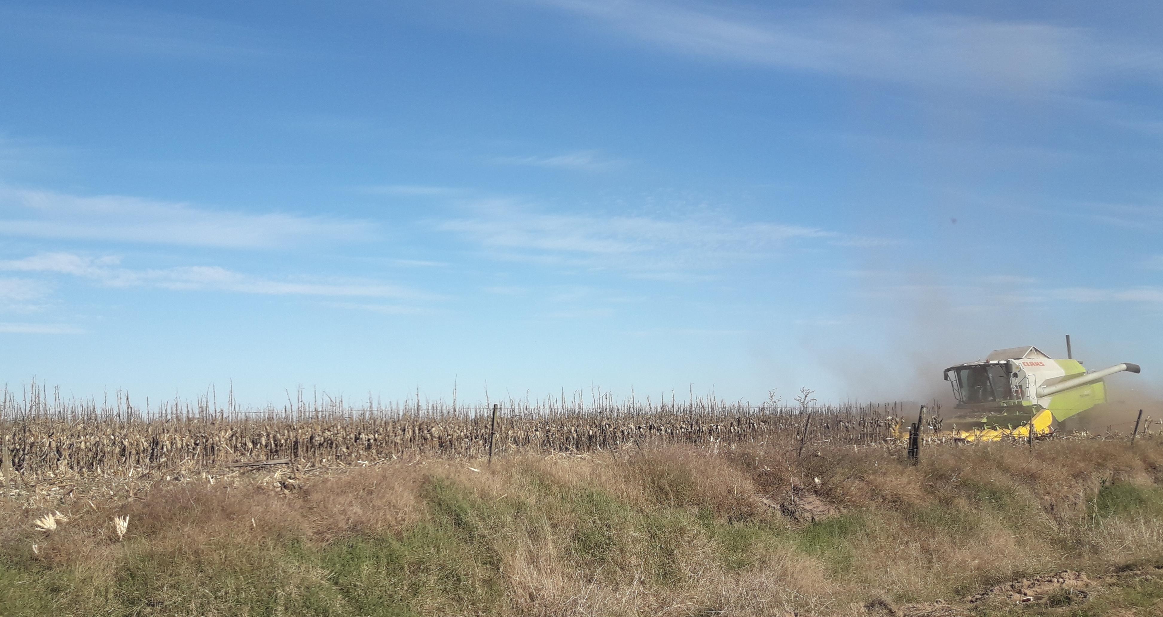 El campo otra vez vuelve a ser el salvataje: frenan la baja de retenciones a la soja y suben 10 por ciento al trigo y al maíz