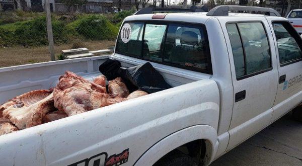 Carne porcina decomisada por Senasa