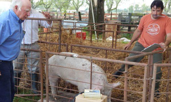 Carlos Pieroni de Rural y Miguel Blanco de ISETA durante la edicion 2017 en el Concurso de Cerdos de la Expo Rural