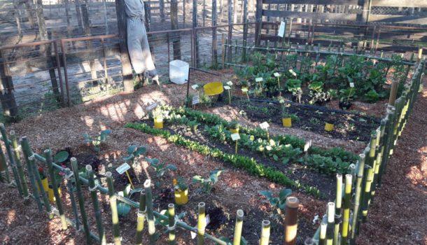 El Pro Huerta con una pintoresca quinta