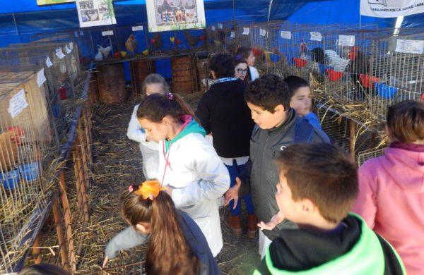 La carpa de aves es muy visitada por el publico, en especial chicos