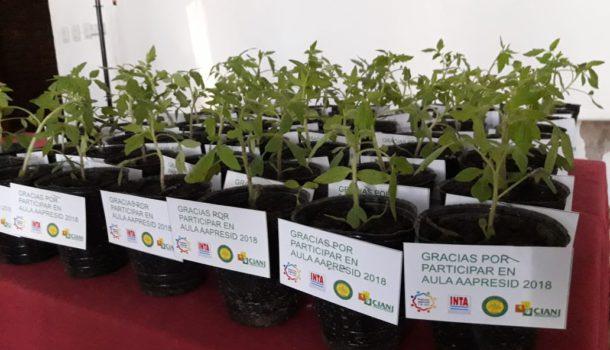 Plantines de tomate que Aula Aapresid entrega a los alumnos