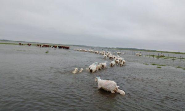 Campo bajo agua en Gral Alvear
