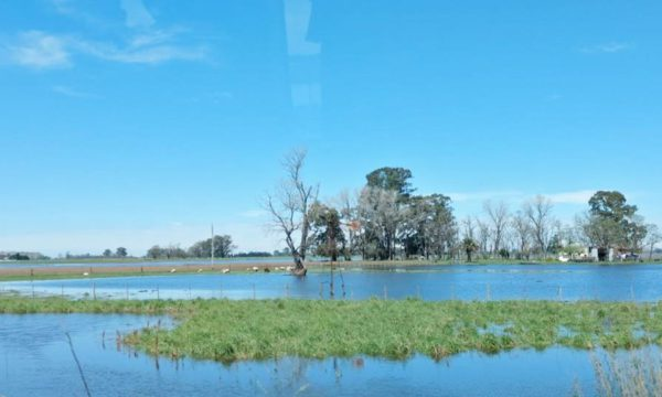 Campo en 25 de Mayo luego de las lluvias