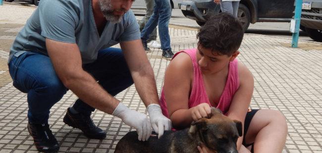 Onagoity durante la vacunacion de un canino