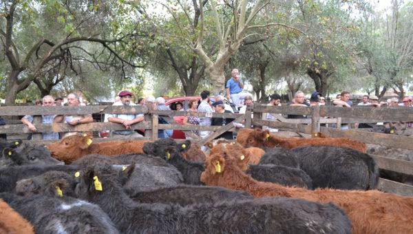 A pesar de los numeros, los productores no bajaron la guardia por hacerse de ganaderia