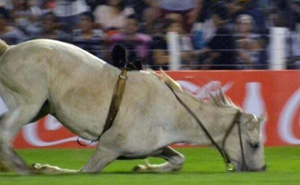 Animal equino que sufrio la caida y horas despues se le practico una eutanasia