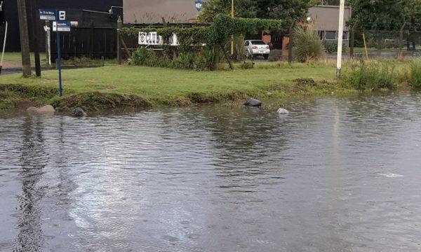Bolsas de residuos flotan producto de la mucha agua en la esquina de Av 25 de Mayo y Pueyrredon