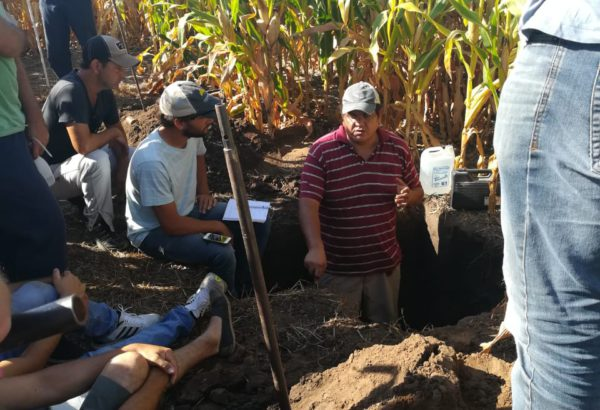 Cristian Alvarez trabajando sobre una calicata en un cultivo de maiz