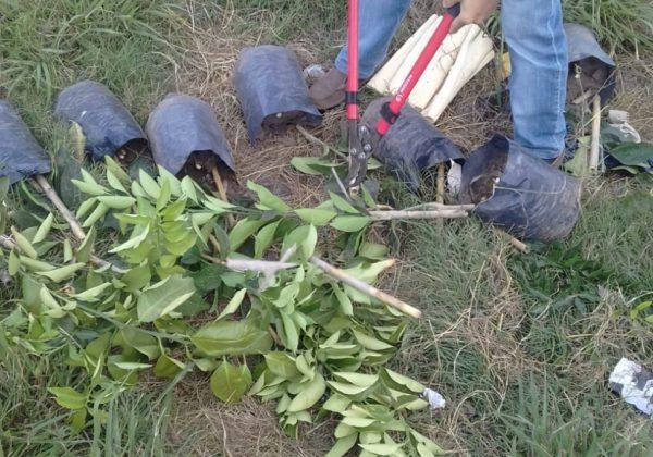 Destruccion de plantas en Baradero