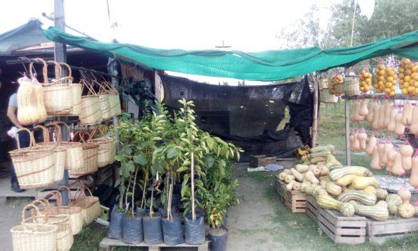 Punto de venta donde fueron localizadas las plantas sin el documetno de Transito Vegetal