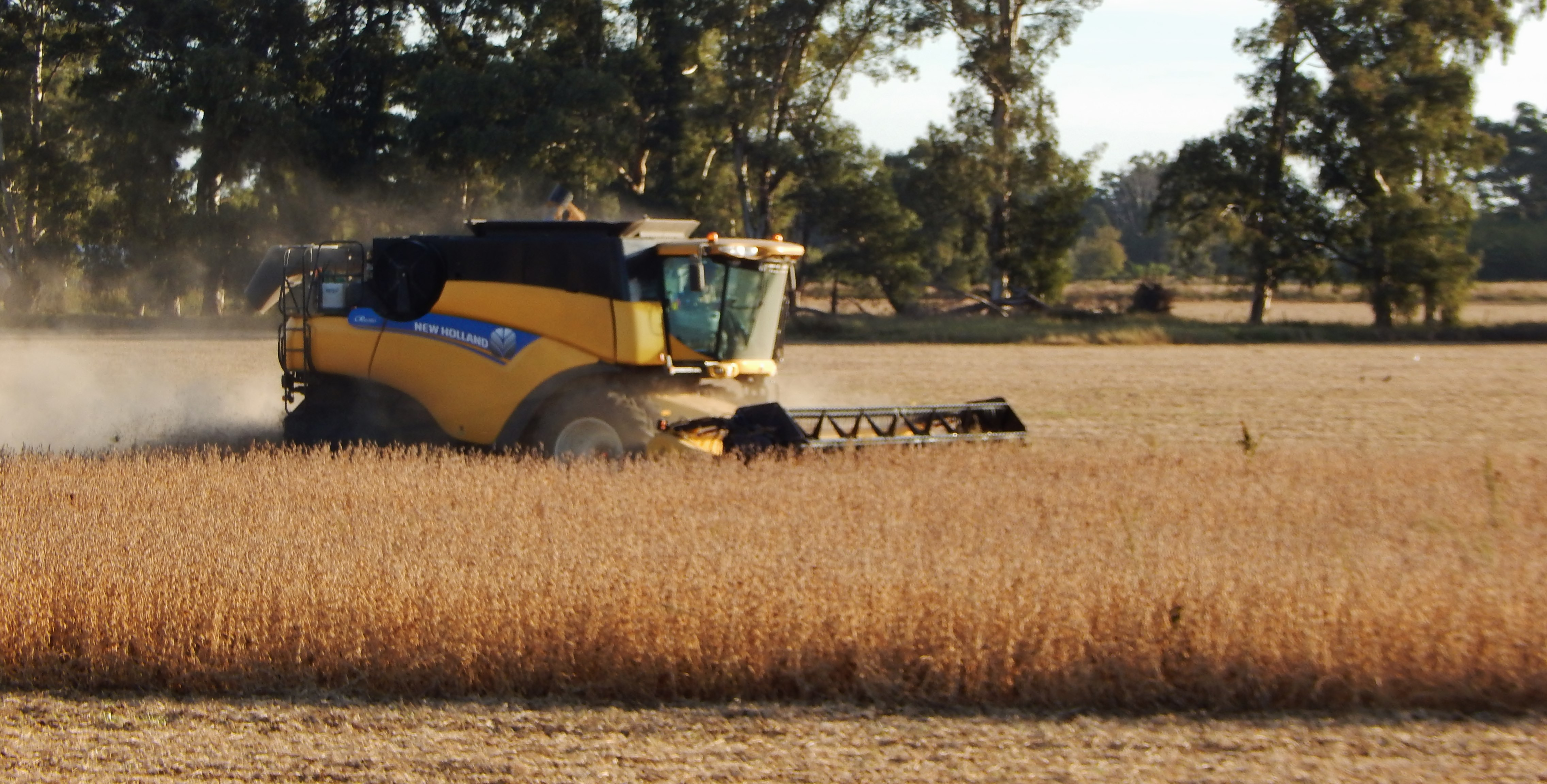 Estimaciones campaña 18/19: Argentina espera una cosecha de 145 mill./tons