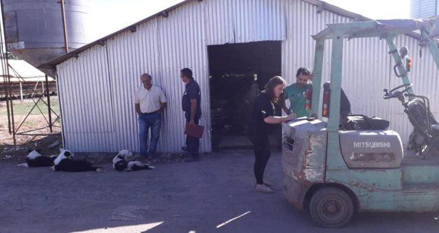 Inspeccion en un campo de Chacabuco