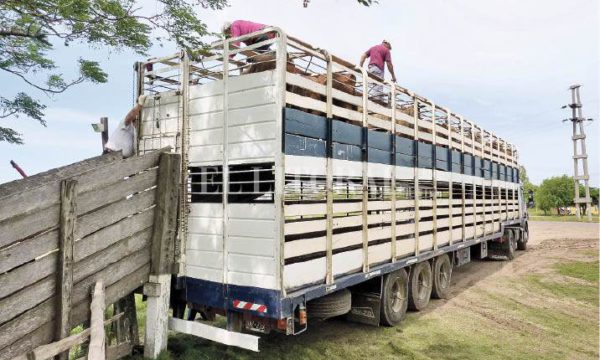 Transporte de haciendas