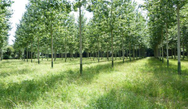 Forestacion en el Delta