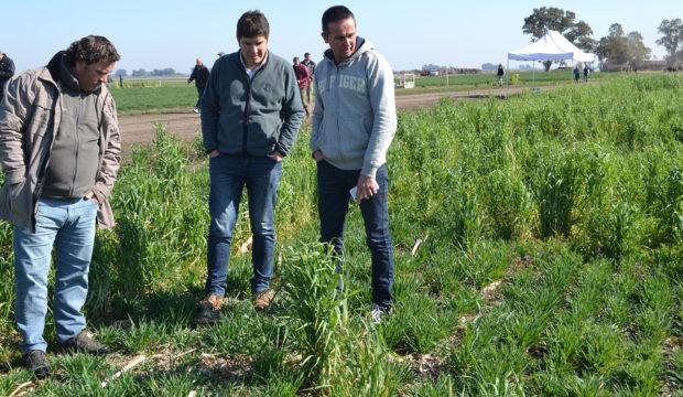 Productores analizan un cultivo de servicio en el CTT
