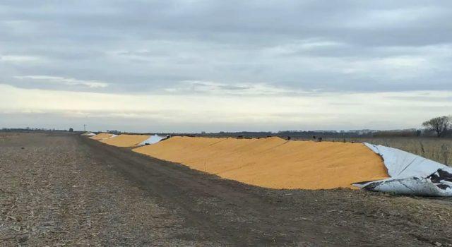 Lamentable la rotura de los silos bolsas en Chacabuco