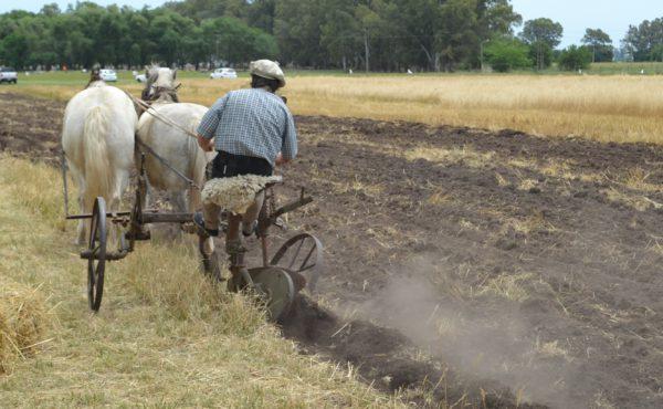 Diego Noli hace su paso con un arado remolcado por caballos
