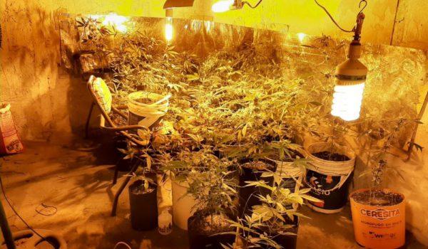 Invernaculo construido en la vivienda donde producian las plantas de cannabis