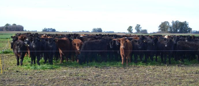 Animales en sistema pastoril