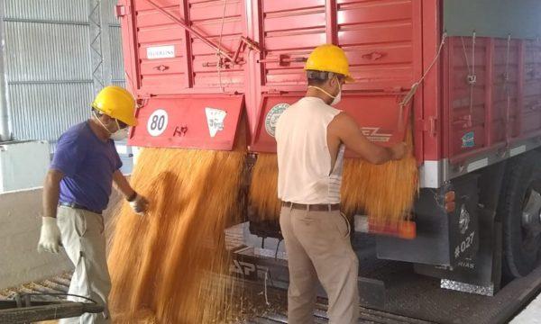 Trabajadores del acopio durante la descarga de maiz