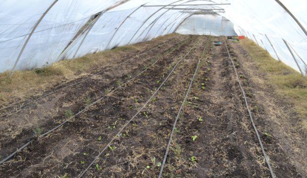 En el invernaculo ya se sembraron varios cultivos
