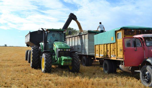 Los primeros rindes de cebada son de 42 a 50 quintales