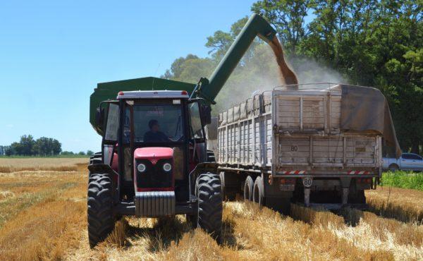 Acarreo de granos al camion
