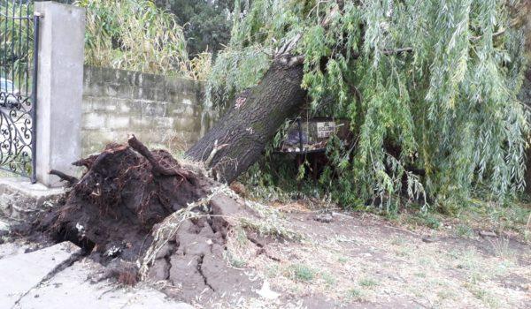 Planta caida en zona de Hogar de Ancianos sobre calle Granada