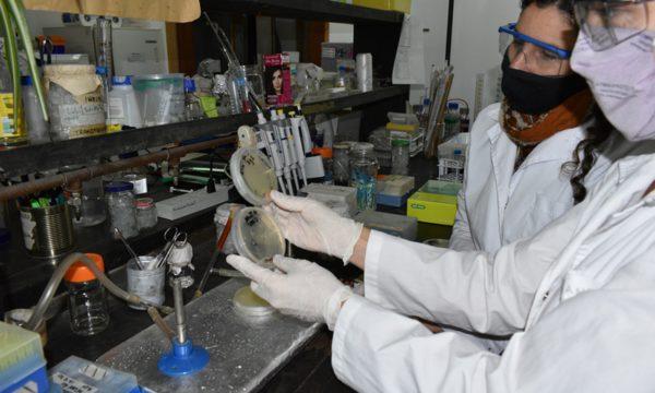 Convenio entre INTA y Laboratorios Bago